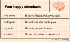Hacking Into Your Happy Chemicals: Dopamine, Serotonin, Endorphins and Oxytocin – Star Base ∞ Connection