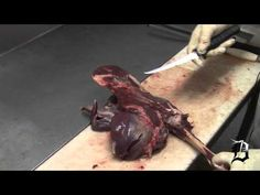 ▶ How To Process Your Deer 4 - YouTube