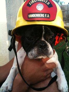 Fire Dog |