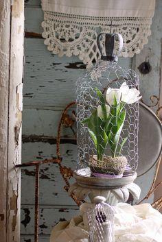 Chicken Wire Garden Cloche | by Raised In Cotton