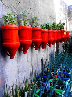 Herb wall using recycled milk jugs                                                                                                                                                     More