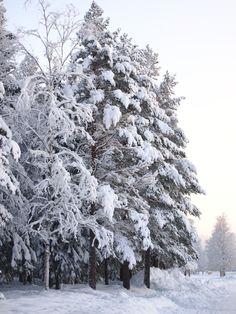 STIL INSPIRATION: Leta efter resultat för winter
