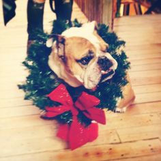 Dozer, the festive trendsetter.