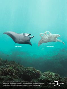 kampagne umwelt Plastik statt Plankton im Magen. Ocean Pollution, Plastic Pollution, Save Our Earth, Save The Planet, Angst Quotes, Save Our Oceans, 4 Oceans, Save Environment, Plakat Design