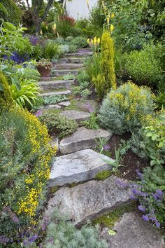 """Bellingham Garden: Thick stone steps curve down from the terrace to the front lawn. Catmint, day lilies, kniphofia and other flowering plants in these beds are left over from Schwiesow's """"perennial sequencing"""" days."""