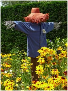 scarecrow among wildflowers