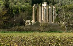 Vineyards in Nemea -Two Amazing Greek Summer Road Trips