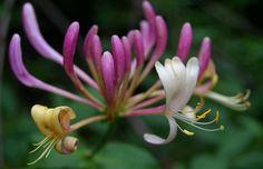 flores extraordinarias - Buscar con Google