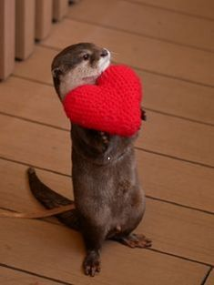 This otter loves you - your daily dose of funny cats - cute kittens - pet memes - pets in clothes - kitty breeds - sweet animal pictures - perfect photos for cat moms Cute Creatures, Beautiful Creatures, Animals Beautiful, Otters Cute, Baby Otters, Cute Little Animals, Cute Funny Animals, Funny Cats, Otter Love