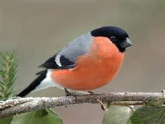 Yahoo! Image Search Results for birds