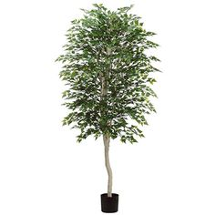 7' Birch Silk Tree w/Pot -Green (pack of 2) *** For more information, visit image link.