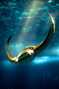 I love how rays ''fly'' through the water! ____________________________ Sting Ray - Ray of Light