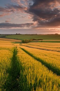 South Downs, Hampshire by Chris Button Nature Aesthetic, Travel Aesthetic, Beautiful Places To Visit, Beautiful World, Nature Verte, Landscape Photography, Nature Photography, Scenery Wallpaper, Nature Pictures