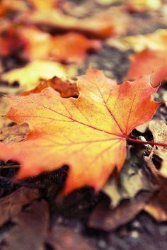 Autumn Day, Autumn Leaves, Fallen Leaves, Autumn Girl, Warm Autumn, Lovely Smile, Mabon, Autumn Aesthetic, Seasons Of The Year