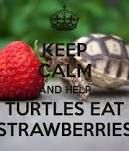 turtle eating strawberry - Google Search