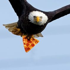Happy 4th of July from wealleatpizza.