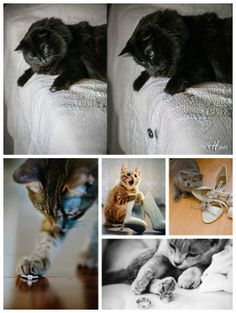 Awesome way to have wedding pictures with my cats without bringing them to the wedding. OMGOMG MY WEDDING. Cat Wedding, Wedding Pictures, Dream Wedding, Wedding Ideas, Crazy Cat Lady, Crazy Cats, Cat Photography, Wedding Photography, Before Wedding