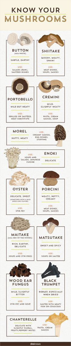 It's time to get your fungus knowledge down with this mushro.-It's time to get your fungus knowledge down with this mushroom infographic It's time to get your fungus knowledge down with this mushroom infographic - Vegan Recipes, Cooking Recipes, Cooking Hacks, Cooking 101, Couple Cooking, Cooking Quotes, Cooking Beets, Cooking Pasta, Cooking Steak