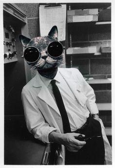Professor Cat~♛