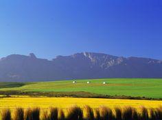 Overberg beauty