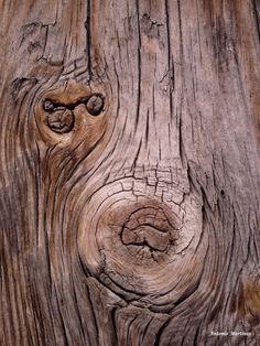 Una ventana a la naturaleza: Textura de madera seca