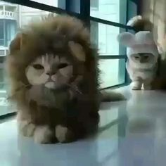 Lol this is not a happy camper Cute Funny Animals, Funny Animal Pictures, Cute Baby Animals, Animals And Pets, Cute Cats, Funny Cats, I Love Cats, Crazy Cats, Animal Memes