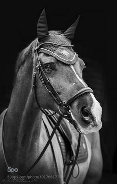 Valegro. i love the dancing horse