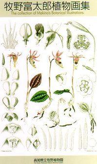 牧野富太郎 : 牧野富太郎植物画集  Tomitarou Makino : Tomitarou Makino plant collection of pictures 図鑑としても、画集としてもすばらしい 「牧野富太郎植物画集」  忠実に再現している事から言うと 具象絵画だろうけど、 彼の植物を愛する部分が透けて見えて来るような 美しい「科学の図」観ていて飽きない。  純粋でありたいと見る度に思う。