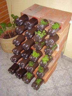 horta plantada em garrafas apoiadas em blocos de tijolo