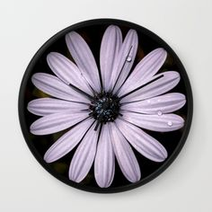 Buy Daisy Mauve Wall Clock by xiari_photo. Worldwide shipping available at Society6.com. Just one of millions of high quality products available. #wallclock #clock #time #daisy, #mauve, #purple, #white, #violet, #indigo, #drop, #water, #flower, #nature, #natural, #garden, #outdoor, #backyard, #black, #background, #petals #bloom, #spring, #season, #happy, #central, #blue, #flowers, #head, #wet, #photo, #photography, #nikon, #dslr