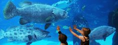 Top 10 Largest Aquariums in the World