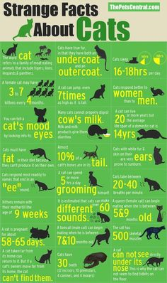 Morning infographic lovers, check out this fun infographic on strange cat facts. It has been made by the people at The Pets Central, there are some really fun and interesting facts about cats. I am a dog man, but theses cat facts are well worth a look. Crazy Cat Lady, Crazy Cats, Cat Info, Gatos Cats, Weird Facts, Strange Facts, Random Facts, Strange Things, True Facts