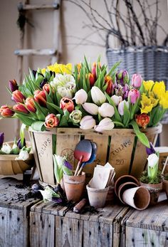 A colorful array of spring tulips in a wooden crate with clay pots and garden supplies in front.