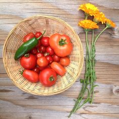 Today's tiny #harvest of #jalapeño,#tomatoes and  #calendula