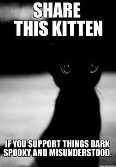 I have a black kitten I love horror and creepypastas but IM not that dark'n stuff. I do like spookay! things tho