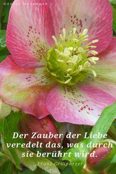 """""""Der Zauber der Liebe verdedelt das, was durch sie berührt wird."""" (Franz Grillparzer) www.mediveda.de Foto: Sonja Moormann"""