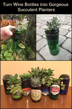 Make simple succulent planters out of old wine bottles! Know the step by step procedure to create a planter that is perfect for accentuating your home.