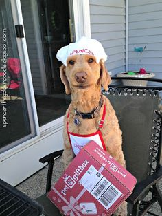 """I'm excited to share with you the Pet Gift Box, July's subscription. Each month Pet Gift Box has a theme and July's theme was """"Bark-B-Que."""" Visit my blog to learn more! spencerthegoldendoodle.blogspot.com"""