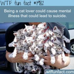 "Being a ""Cat Lover"" could cause Mental Illness - that COULD lead to Suicide?  WTF! not-so-fun facts"