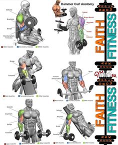 Perfect Biceps Exercises Anatomy Healthy Arms Fitness Workouts