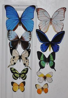Check out Butterfly Magnets Wholesale Lot of 10 Refrigerator Magnets Insects on dougwalpusartstudio