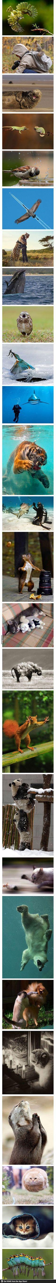 這些動物照好有戲 XD