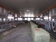 River Valley Dairy- Show Barn Idea