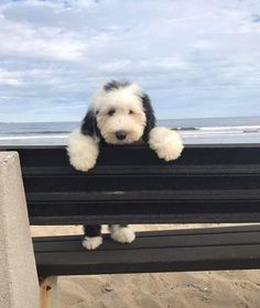 29 Ideas baby boy names nature beautiful Cute Dogs And Puppies, I Love Dogs, Doggies, Chihuahua Dogs, Pet Dogs, Fluffy Animals, Animals And Pets, Bichon Havanais, Old English Sheepdog