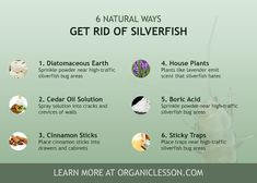 Six tips on getting rid of silverfish bugs naturally. Try these home remedies now to control pests.