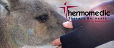 Just love caring for these gentle animals. this one had her little joey with her! Good Cause, Community Events, Pain Relief, Just Love, Therapy, Animals, Animaux, Animal, Animales