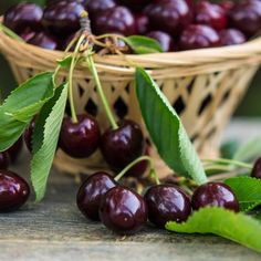 Delicious, Juicy, Plump Cherries -  	- Delicious fruit in half the time  	- Adaptable to various types of soil  	- Drought tolerant   	Bing Cherries give you a deep red color... and they are the most popular dark cherry you can find.  	 	You can even grow them organically... meaning no pesticides. Just pluck these delicious...