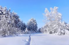 Can you imagine how beautiful can be our planet? Snow And Ice, Our Planet, Jack Frost, How Beautiful, Amazing Nature, Winter Wonderland, Natural Beauty, Planets, Scenery