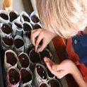 Planting Seeds Theme for Preschool