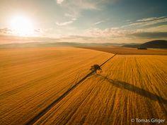 Spomienka na zlaté leto  Fields of Gold, Slovakia